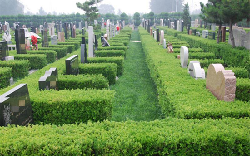 极乐殡葬网揭秘:沈阳墓园地气充足有何现象