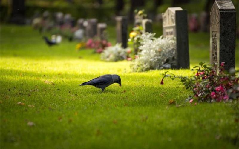 极乐殡葬网教你挑选最合适的墓地方位
